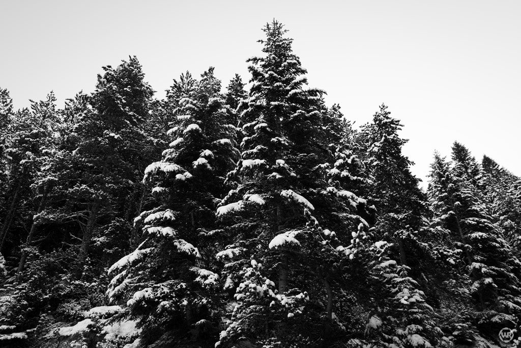 paisaje nevado blanco i negro